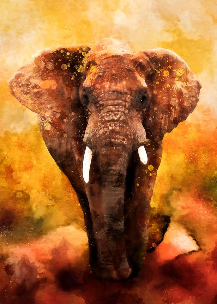 Afryka III